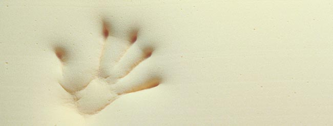 Tempur Ratgeber generell handprint